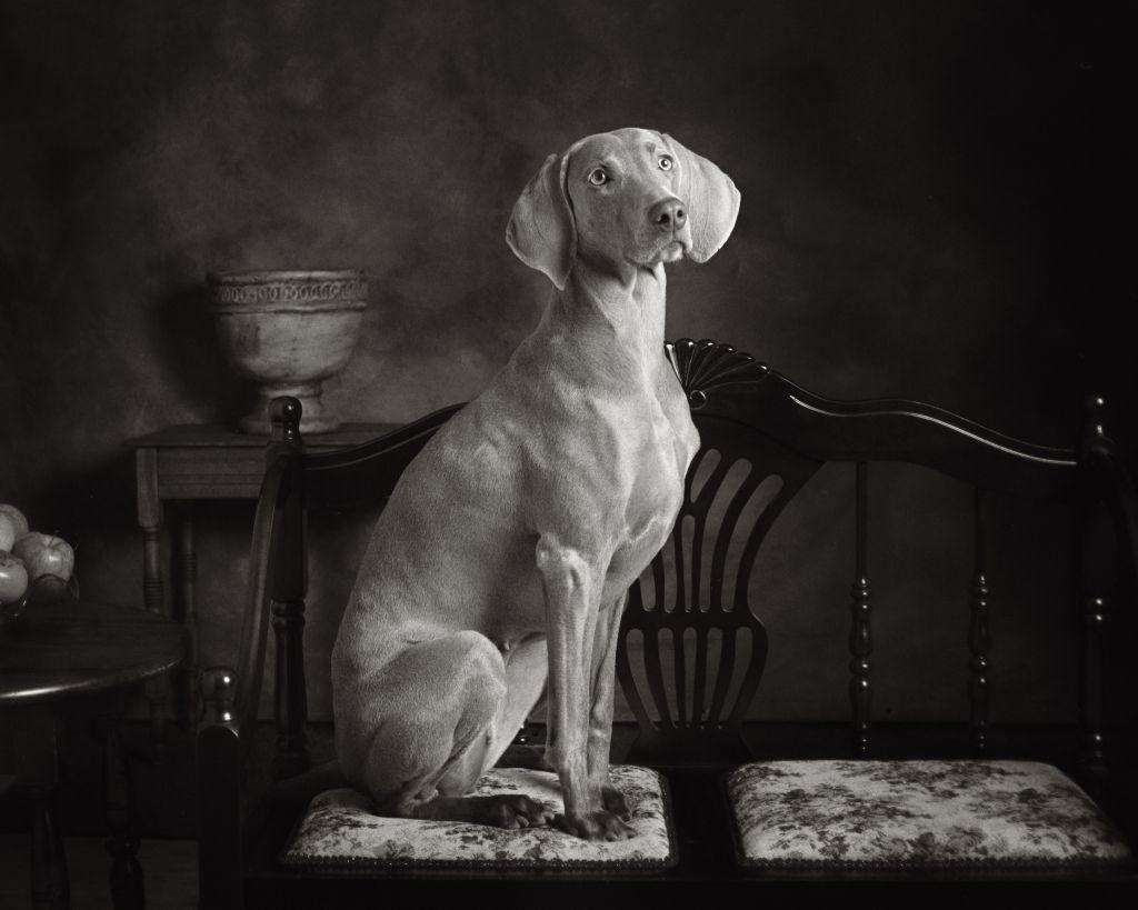 Everett Pet Photographer