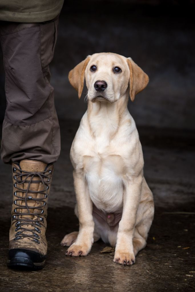 The Horse & Dog Photographer